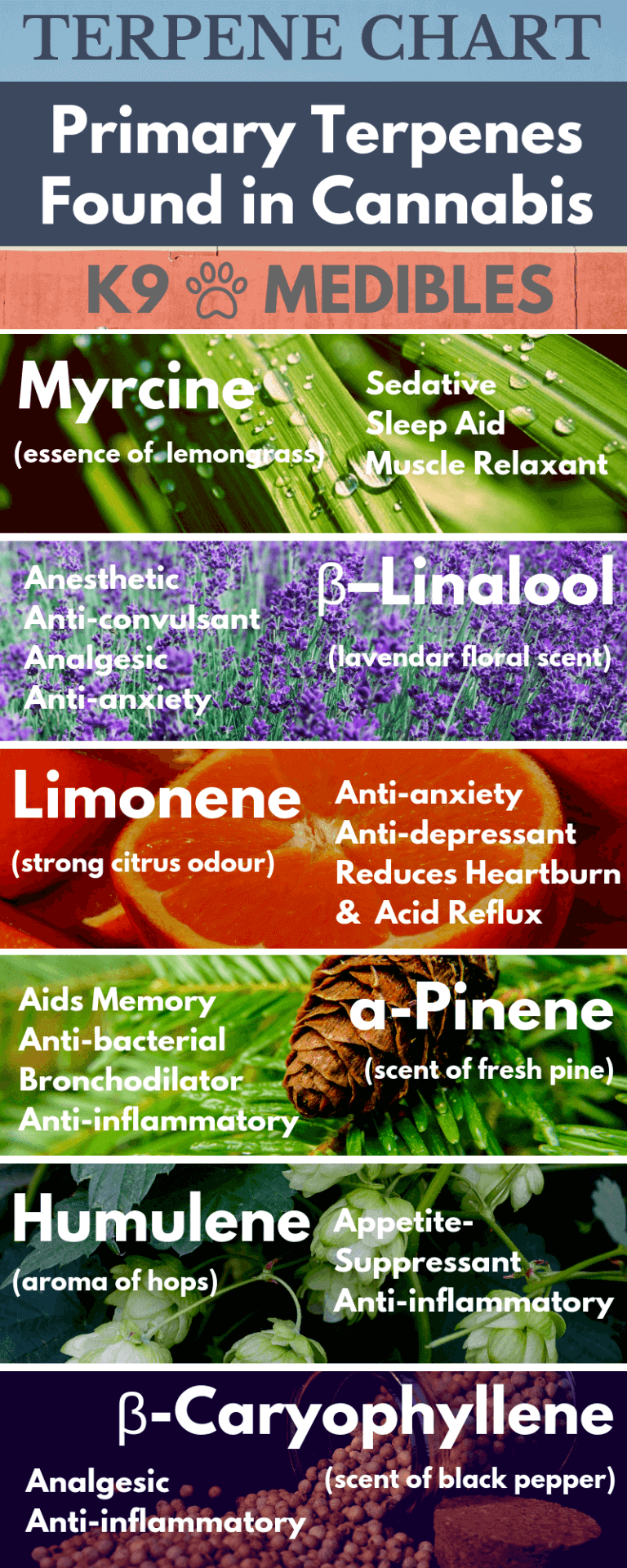 A Cannabis Terpene Chart showing the primary terpenes found in a cannabis plant